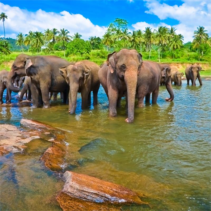 Доставка грузов из Шри-Ланки