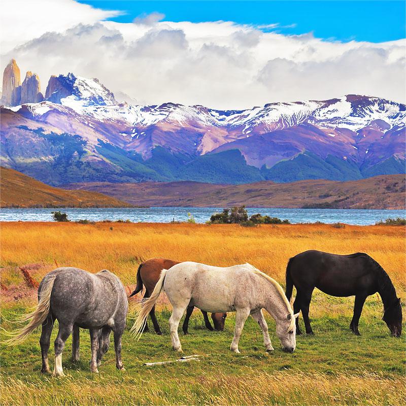 Доставка грузов из Чили