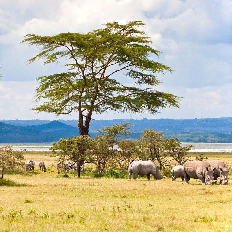 Перевозки грузов в Кению